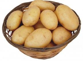 马铃薯高产栽培技术操作规程.