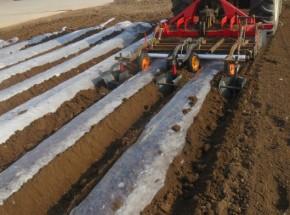 双垄双行马铃薯种植机种植现场