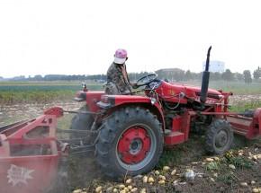 马铃薯杀秧收获一体机研发成功。