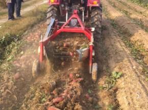 4U-90型红薯/地瓜收获机