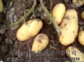 马铃薯收获机机械杀秧后收获现场8.0