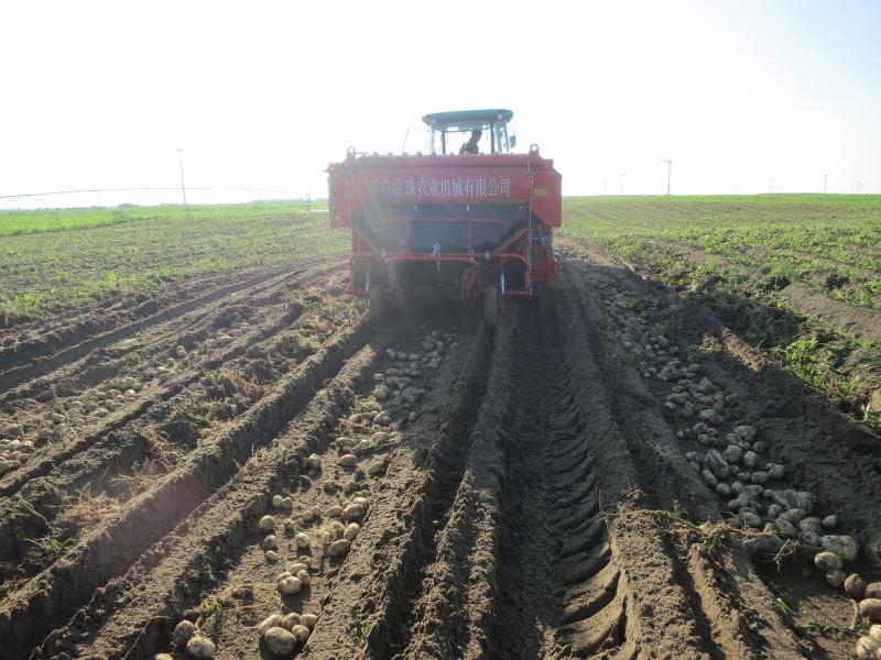 4u-170a收获马铃薯明薯率高,集中性强