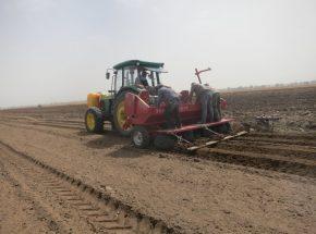 洪珠牌微型薯播种机单株取种率达到95%以上
