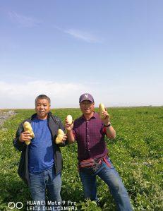 马铃薯界的一股清流—新疆阿克苏大野种薯郸擎东采访纪实